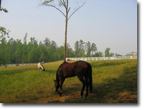 Horses in the new paddock